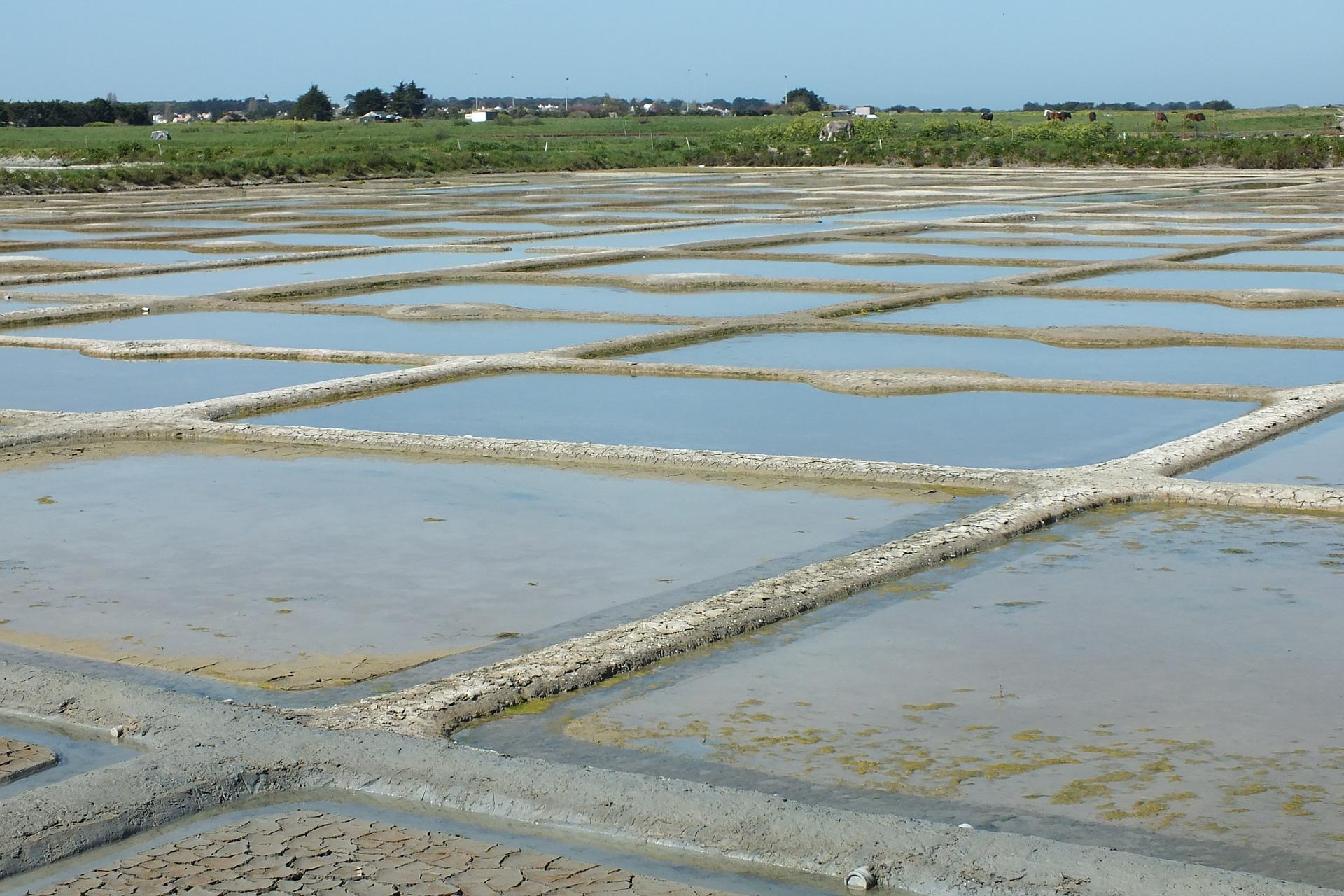 Udvinding f havsalt ved Noirmoutier