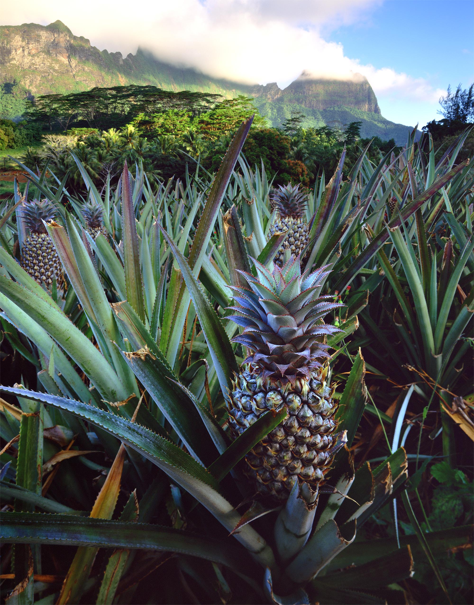 Polynésie française ananas