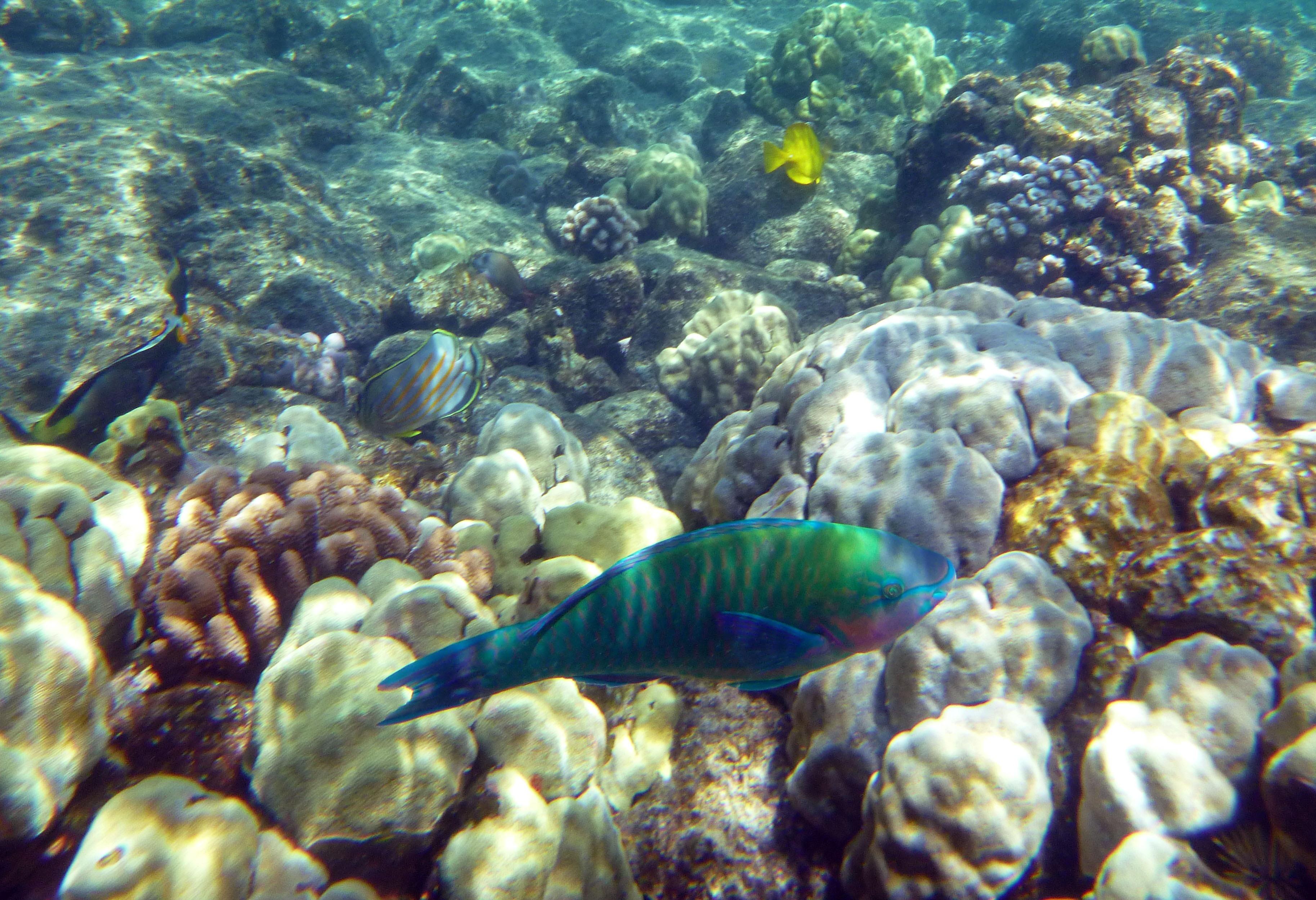 Polynésie française fisk