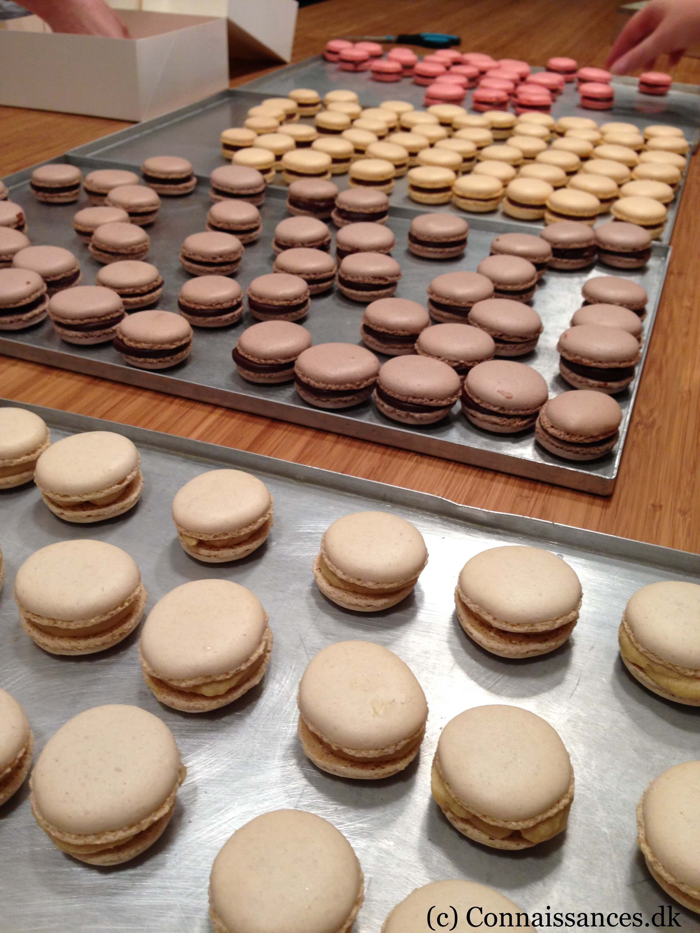 macarons-frederic-terrible